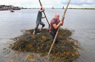 Competitors after passing the finish line in the Cimín Race (Seaweed Race) at Cruinniu na mBad Festival in Kinvara at the weekend.
