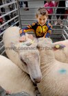 <br /> Dylan Devane, with his fathers sheep at the Clarinbridge Market Day.