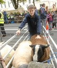 <br /> Gavin Keane, Ardrahan with his fathers sheep, at the Clarinbridge Market Day.