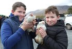 Sean and Dylan O'Connor from Porridgetown, Oughterard with Pekin bantams  at the Maam Cross Fair on Tuesday.