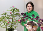 Bridget Morley from Oughterard exhibited at the Galway Flower and Garden Club Christmas Gala Night in the Menlo Park Hotel. Bridget is holding her flowering pot plant beside her Busy Lizzy foliage grown from a slip from a 50 year old plant.